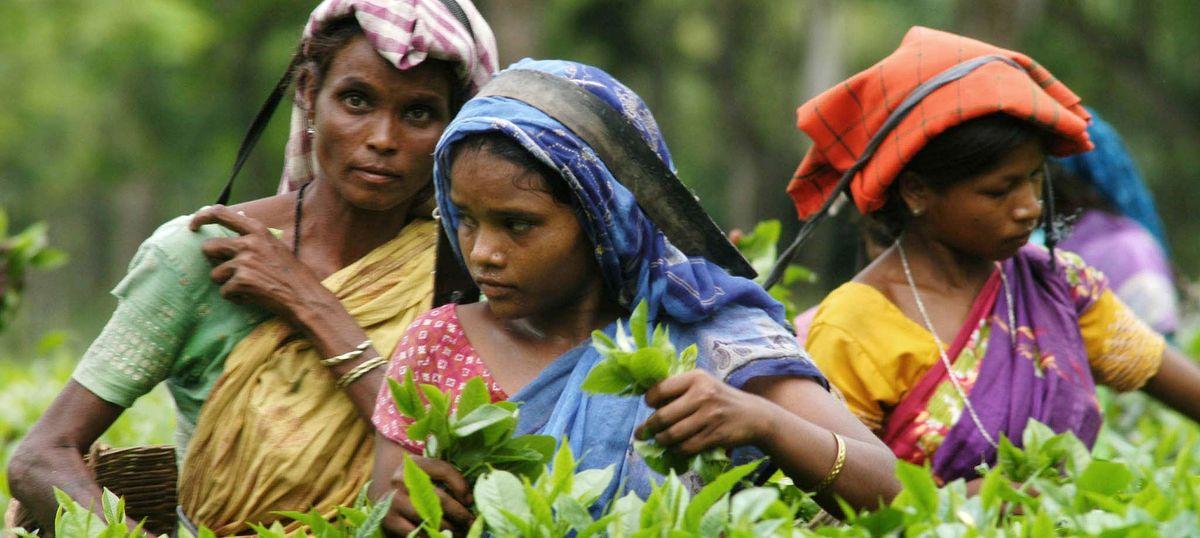 असम में बसे झारखंड के संथाल और उरांव समुदाय को जल्द अनुसूचित जनजाति का दर्जा प्राप्त होगा