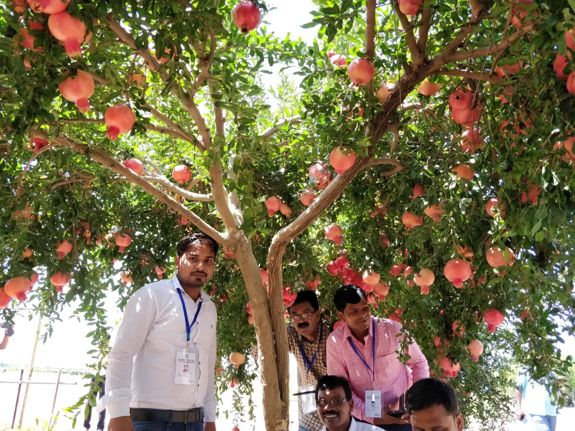 Jharkhand farmers learn innovative farming techniques in Israel
