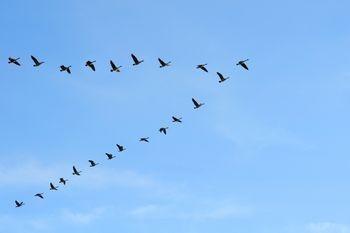 Balls of iron guide birds to navigate
