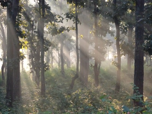 Monsoon escape lies near green forest in Ranchi