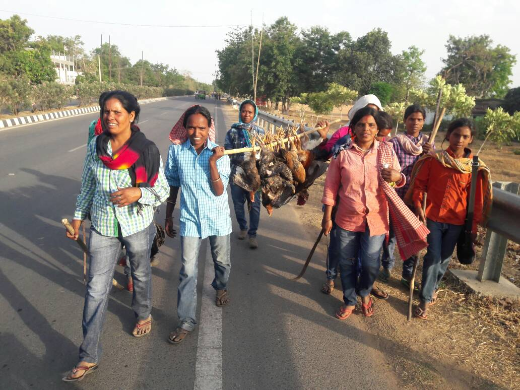 Tribal women move hunting chickens-roosters,celebrate Jani Shikar
