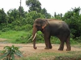 <p>Elephant appears to be waiting for monsoon rains inside Birds Munda Zoological Park,Ormanghi,Ranchi.</p>