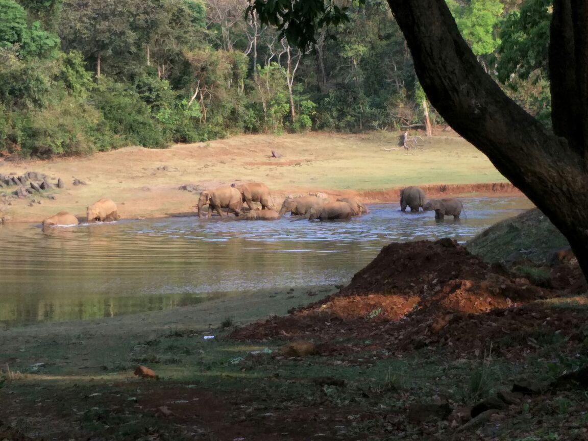 <p>A herd of wild elephants seenenjoying cool bath deep inside the forest of Jharkhand.</p>