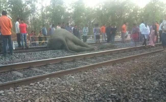 <p>Four elephants were crushed to death by a Goods train on railway tracks located along-Jharkhand-Odisha border falling under Chhakradharpur-Jharsugoda Railway division on Sunday&#8230;