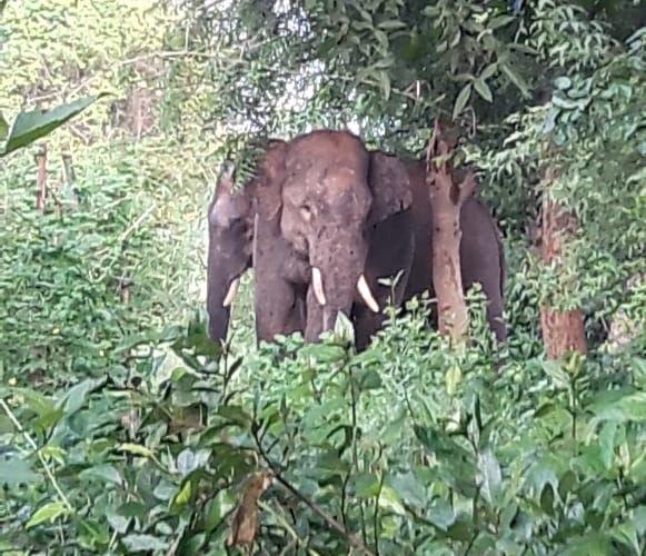 <p>राँची - एडरहातु सोनाहातु में जंगली हाथी दिखने से ग्रामीणों में हड़कम्प, फ़ॉरेस्ट विभाग को सूचना दिया गया।हाथी का झुंड अभी बगल के जंगल में है।</p>