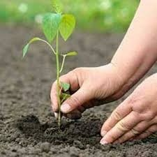 <p>1 person,5 trees To motivate every citizen plant five trees,Jharkhand Tourism,Art,Culture,Sports and Youth Department is slated to launch a campaign -1 person 5 trees-on July…