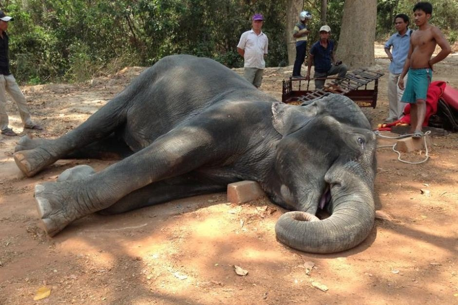 <p>By coming in&nbsp;contact&nbsp;with 11000 volt electric wire fallen on the ground,one elephant was electrocuted to death near Dalbhhumgarh in Ghatshila,located close to Jamshedpur&#8230;