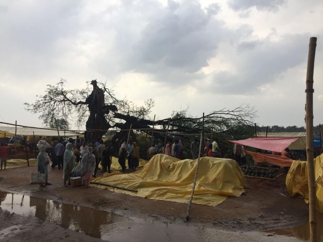 <p>Parts of Ranchi and its adjoining districts received rainfall with strongwinds this afternoon, bringing down the temperature. An old tamarind tree at Shalimar bazaar in Dhurwa…