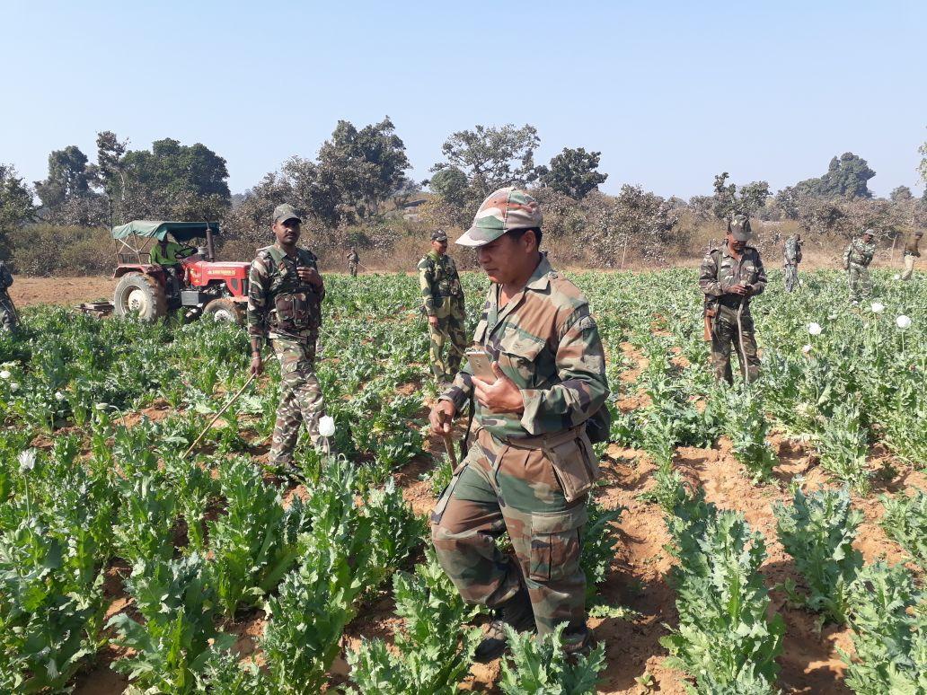 <p>अफीम की फसल को नष्ट कर रही है रांची &nbsp;पुलिस - आदर्श ग्राम हाहाप नामकुम में अफीम की फसल को नष्ट &nbsp;किया अफीम माफिया ने आदर्श ग्राम के युवको को बहला फुसला कर अफीम की खेती मे&#8230;