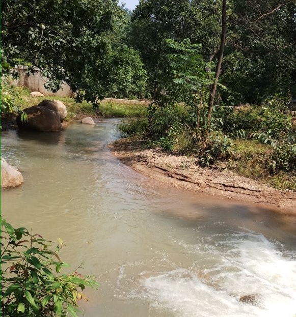 <p>A rivulet flows through the picturesque forest of Netarhat area in Latehar district of Jharkhand.</p>