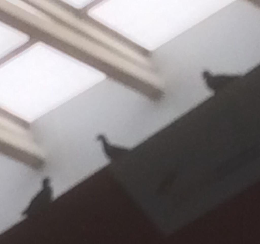 <p>Pigeons have invaded highly guarded and modern sight-Indira Gandhi International Airport, Terminal 3, New Delhi, exposes the Pictures taken by JharkhandStateNews photographer today.</p>…