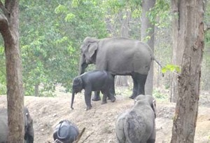 <p>Wild elephants were spotted inside Palamau Tiger Reserve in Palamau.</p>