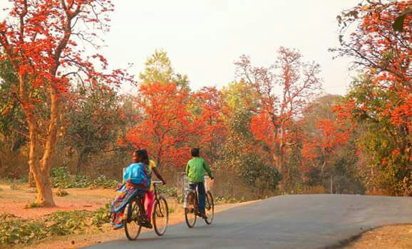 <p>The beauty of nature is reflected by the tree of spring- Palash in Jharkhand.</p>