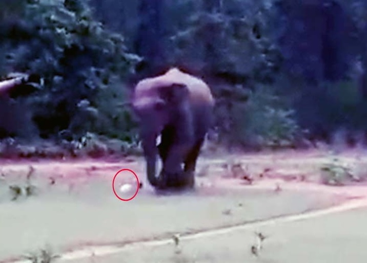 <p>It was a day of footballers with a wild tusker(male elephant with tusk) in Jharkhand. At Dudhiasole Football ground in Shayamsundar Punchayat in Chakulia block in East Singhbhum,Tusker…