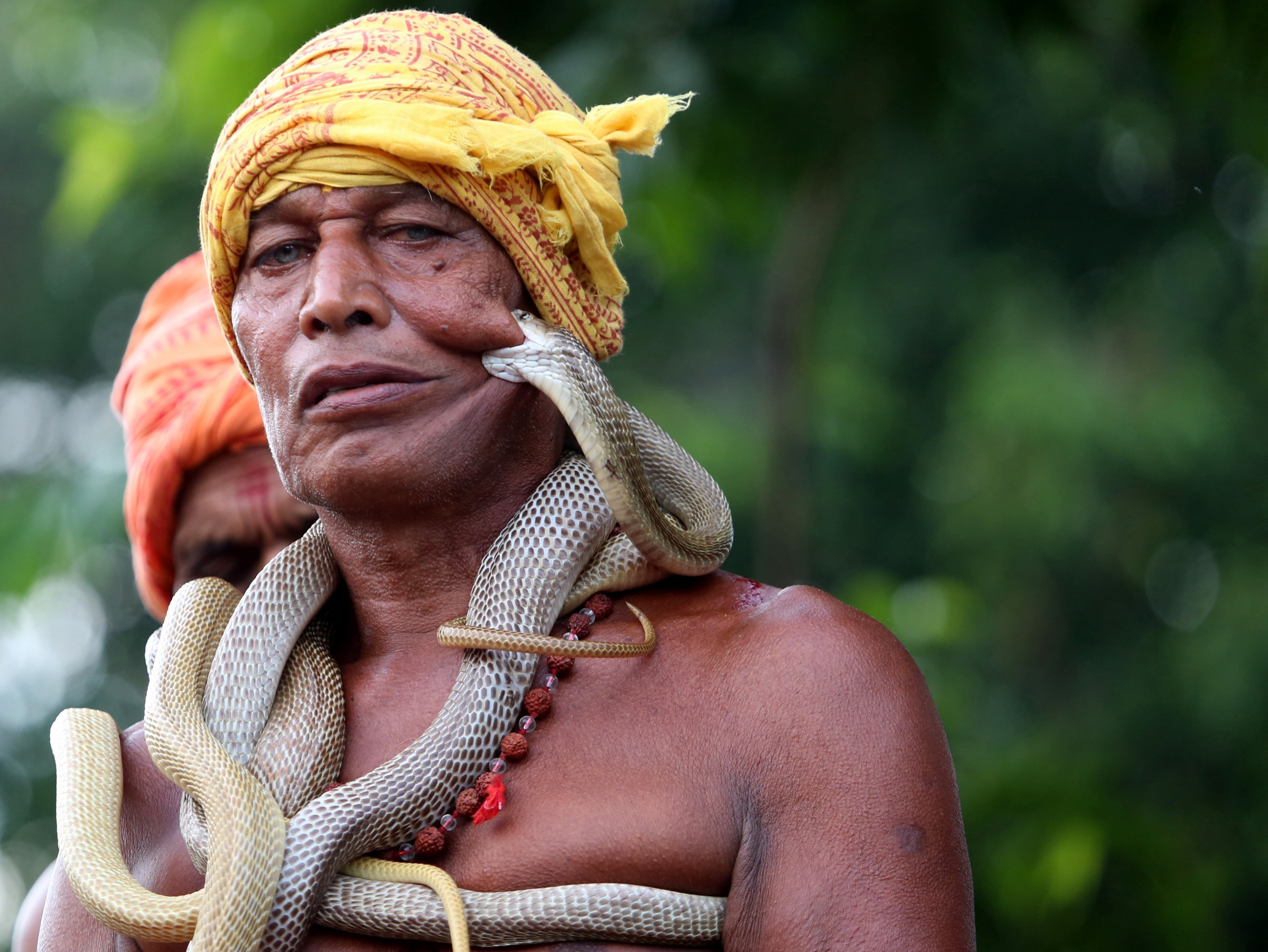 <p>Villagers of Mohlisol at Dhalbhumgarh sub-division under Ghatshila block near Jamshedpur under East Singhbhum district of Jharkhand are seen busy in being bitten by poisonous snakes&#8230;
