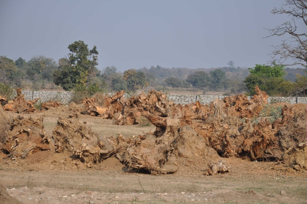 <p>Roots deposits after harvesting of trees by road construction division on NH 33 on the World Environment Day &nbsp;at Ranchi Jamshedpur road.</p>