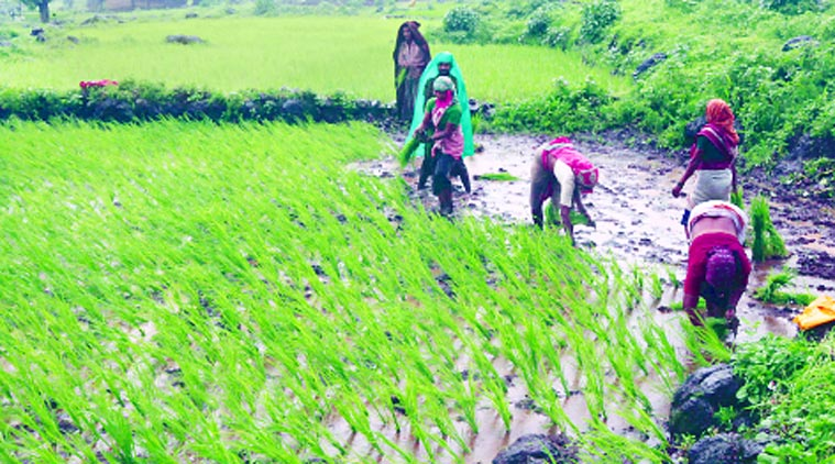 centre-released-rs-227-64-crore-crop-insurance-fund-for-6-01-lakh-jharkhand-farmers