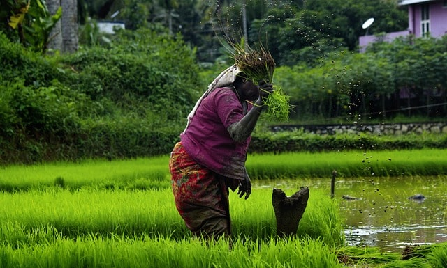 jharkhand-gets-best-performing-state-award-in-rice-category
