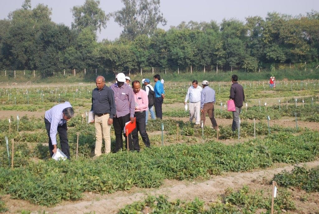 monsoon-gift-to-jharkhand-pulse-production-may-cross-the-target