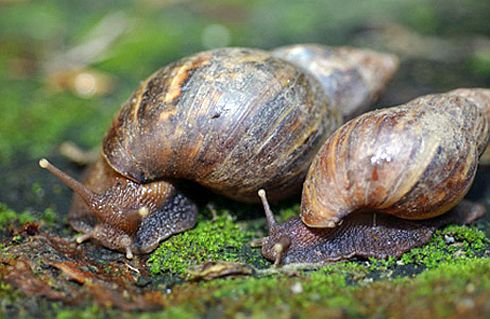Six girls out to catch snails in pond,drown in Godda