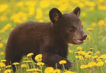 Zoo gains a baby bear