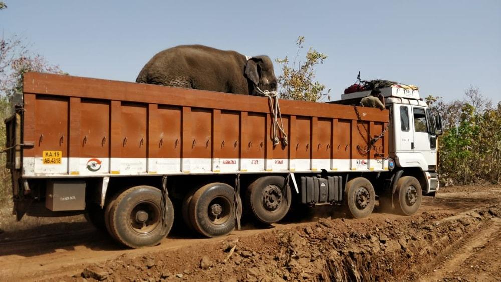 Karnataka elephants come to Jharkhand- Palamau Tiger Reserve