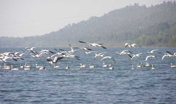 Bird population declines at Tilaiya dam in Jharkhand