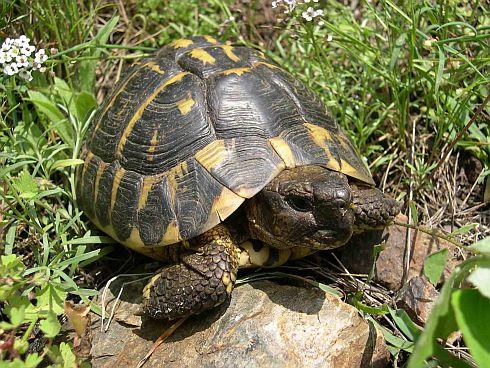 Seizure of 1250 tortoises puzzles police