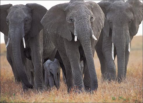 Wild elephants trample politician to death in Tamar