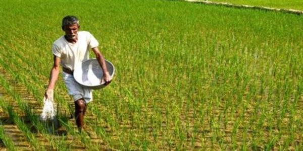 धान में बीमारी का आकलन कर, किसानों को मिलेगा मुआवजा: कृषि मंत्री