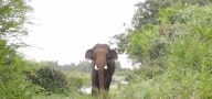 simdega-wild-elephant-attacked-on-wedding-vehicles