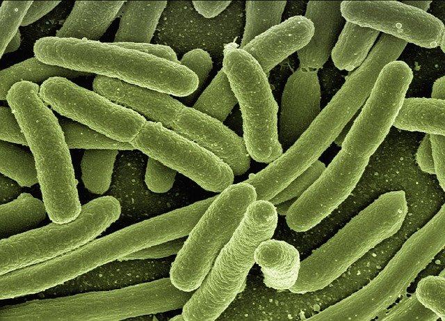 indian-scientists-track-behaviour-of-intestinal-bacteria