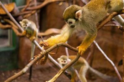 Not only humans,even monkeys are networkers