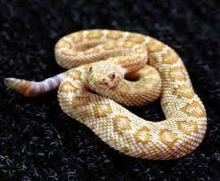 Snakes do family planning ?