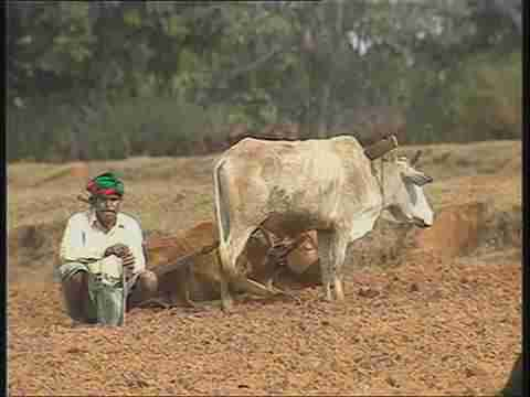 Monsoon delayed, tribal farmers await rains