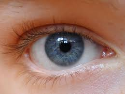 Eye can be created,claims a study