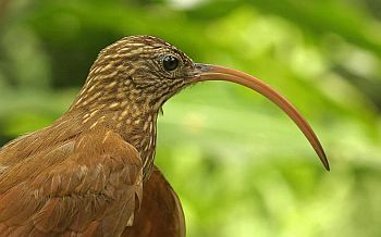 Closely –related birds don't co exist