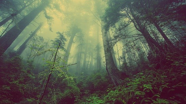 land-of-forests-celebrates-world-environment-day-2021-for-restoration-of-ecosystem