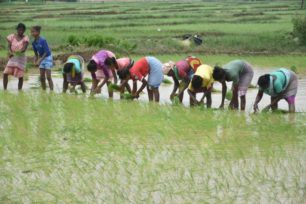 Paddy farmers in cheers after good rain, home stay of kins