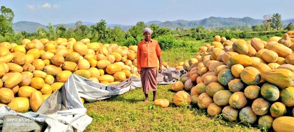 farmers-await-govt-s-help-for-sale-of-their-perishable-vegetables