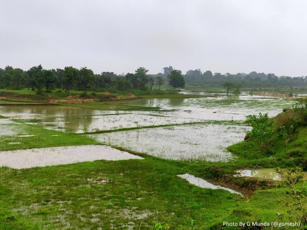 <p>A view of waterlogged rice fields in the Khunti district after receiving heavy rainfall throughout the day on Saturday.</p>