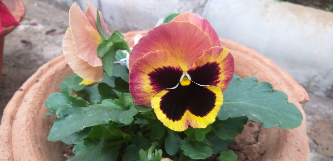<p>If Beauty Lies In Eyes Of The Beholder, this Natural flower at JCSOI-Jharkhand Civil Services Officers Institute, Ranchi, on February 7 Morning, is Product of Plastic Free Earth. </p>…