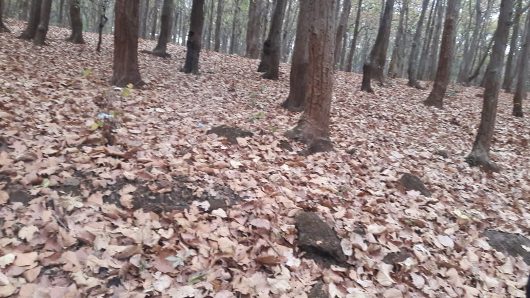 <p>As summer sets in, earth's surface looks like a mosaic of dry leaves in Nature's Heart- Neterhat, located at around 2600 feet above sea level, in the Latehar district…