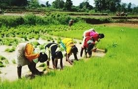 <p>Paddy transplantation work is being carried by tribal women in Ormanjhi,a scene visible across Ranchi and its adjoining areas in South Jharkhand where monsoon rains have brought…