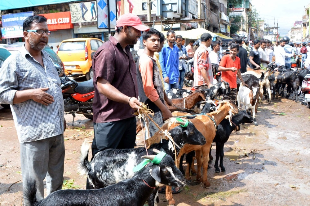 <p>Goats on sale ahead of Eid-Ul Azha or Bakrid at a temporary market  in Ranchi on Monday.</p>