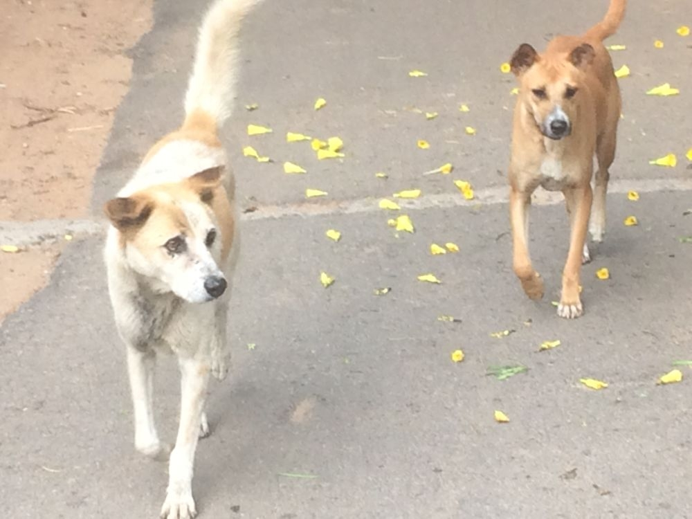 <p>Is there anybody to feed street dogs?After Swacch Bharat Abhiyan, lockdown to prevent spread of coronavirus has purified the environment. The sky, trees, roads were clean.…