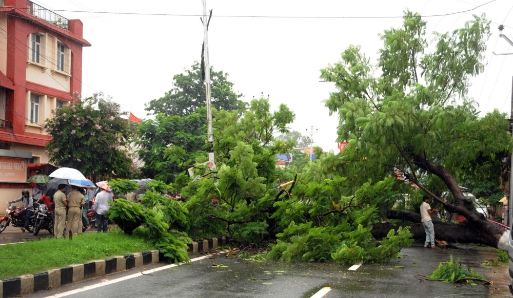 <p>A huge tree falls down outside State BJP office due to heavy downpour in Ranchi on Wednesday .</p>
