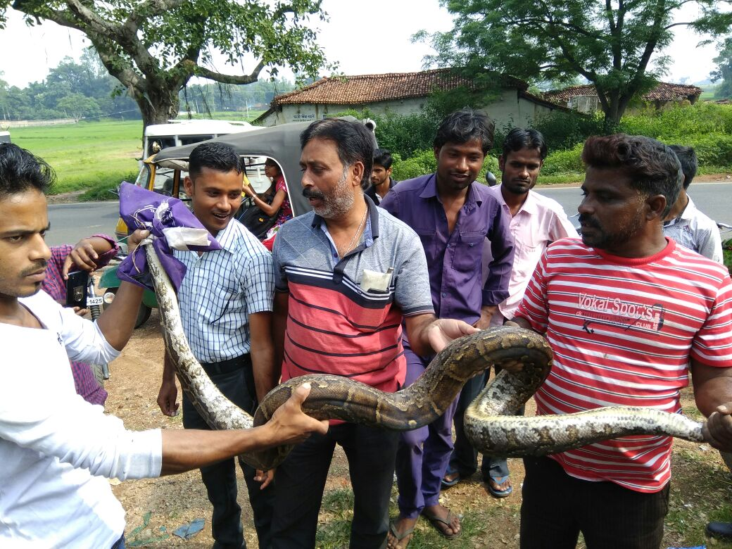 <p>Local villagers of Kargey village under Mander block of Ranchi district captured a 10 foot long Indian rock Python from the village on Tuesday. The smart villagers then handed the…
