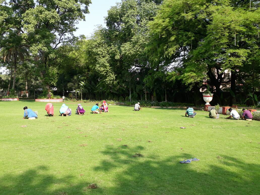 <p>With the fall of rain and 'dubh' getting mixed up with a variety of grass in green garden of Jharkhand Civil Service Officers Institute,workers were struggling to remove…