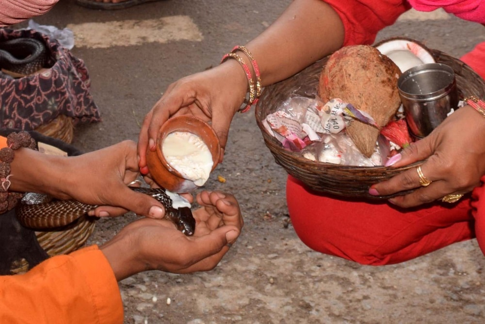 <p>A devotee offer prayers to a snake at Pahari Mandir on the occasion of Nagpanchami festival in Ranchi on Friday.</p>